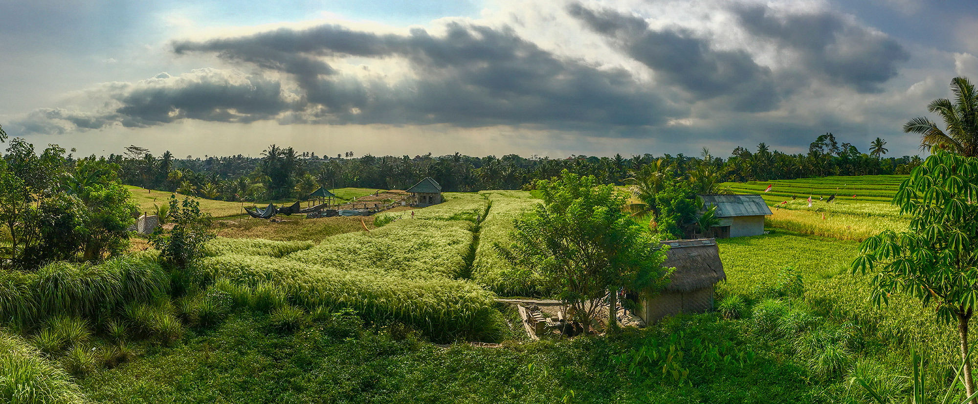 Rice fields just outside of Ubud, taken with the iPhone6s